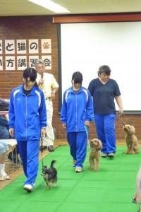 日野市犬と猫の飼い方講習会3