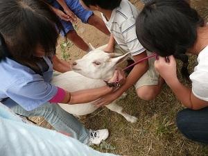 東京都「小学校動物飼育推進校事業」