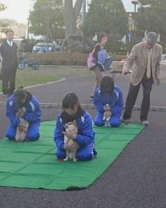 藤井先生による犬のしつけ教室