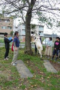 学校飼育動物 教員向け講習会