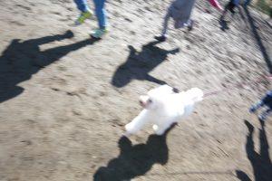 東京都教育委員会「小学校動物飼育推進校」事業